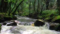 River cascades at Golitha Falls in Cornwall