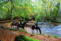 Horse Riding at Golitha Falls near Bodmin Moor